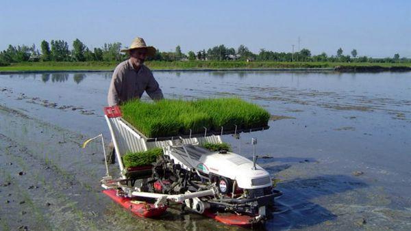 پیشگیری از ابتلای 6 میلیون عضو خانواده شالیکاران به کرونا با تامین کمباین و نشاءکار برنج