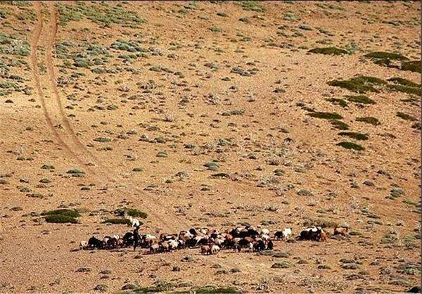 نابودی مراتع و تشدید خشکسالی