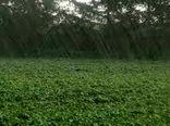 کاهش ۲۶ درصدی بارندگی طی سال زراعی جاری در خراسان شمالی