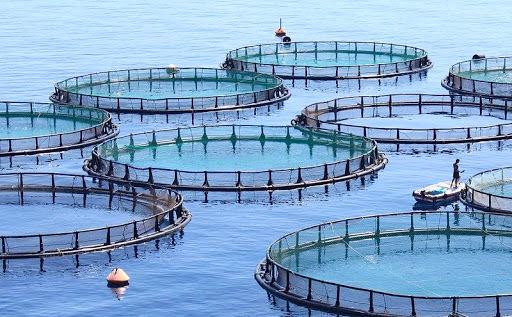 صدور مجوز پرورش ماهی در قفس در استان خوزستان