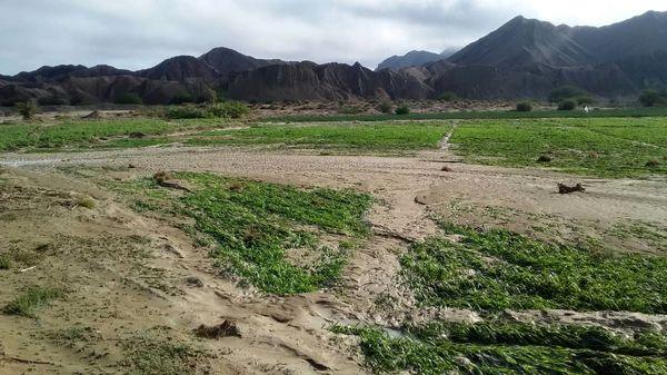سیلاب محصول 35 هزار هکتار از اراضی کشاورزی سیستان و بلوچستان را نابود کرد