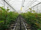 شهرستان شیروان 28 گلخانه فعال دارد