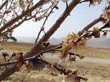 سرمازدگی درختان بادام در خراسان شمالی