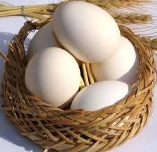 قیمت مصوب تخم مرغ درب مرغداری 9500 تومان و سطح عرضه 20 هزار تومان