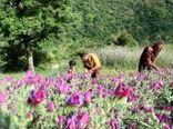برگزاری کارگاه آموزشی سایت جامع الگویی تولیدی ترویجی در زمینه گیاهان دارویی