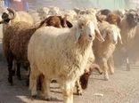 خشکسالی و گرانی نهاده های دامی سبب افزایش میزان کشتار و حذف دام در خراسان شمالی