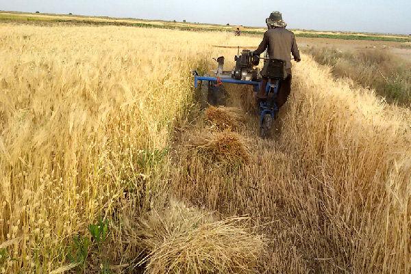 خرید تضمینی ۳۸ هزار تن گندم در اصفهان