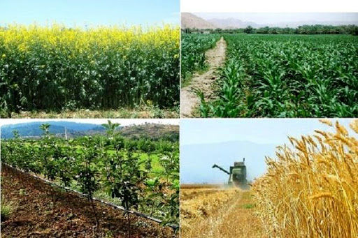 ارزش سالانه محصولات کشاورزی خراسان شمالی ۷۷هزار و ۵۷۲میلیارد ریال است