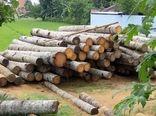 توسعه زراعت چوب کشور در وسعت 40 هزار هکتار در سال جاری  هدفگذاری شده است