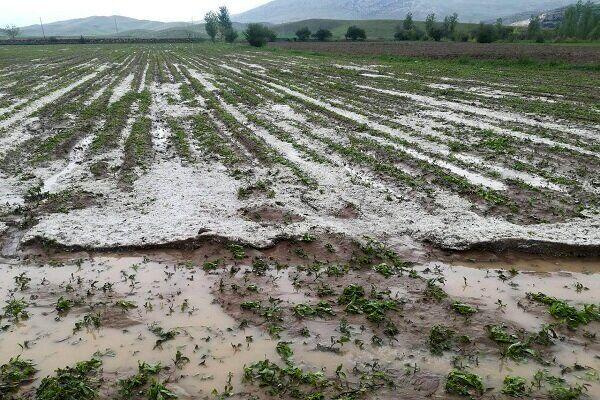 حوادث غیرمترقبه ۱۷۳۱ میلیارد تومان به بخش کشاورزی آذربایجان غربی خسارت وارد کرد