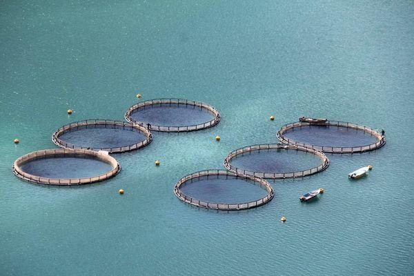 ظرفیت تولید ۳۰ هزار تن ماهی در چهارمحال و بختیاری