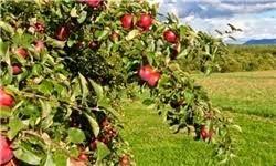 تخصیص اعتبار 500 میلیارد ریالی برای اجرای طرح های جهش تولید در بخش کشاورزی زنجان