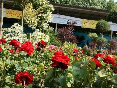 صادرات 78 هزار اصله گل از نوشهر به خارج از کشور