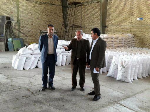 شهرستان هشترود، قطب تولید بذور اصلاح شده گندم دیم در آذربایجان شرقی است