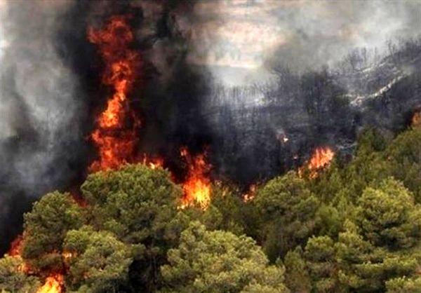 ۶۰ هکتار از مراتع مشجر در سردشت طعمه حریق شد