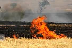 جریمه و حبس برای آتش زدن بقایای گیاهی