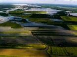 ارتقاء امنیت غذایی با افزایش تنوع ژنتیکی در محصولات زراعی