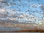 کارگروه مقابله با آنفلوانزای فوق حاد پرندگان در ایران تشکیل شد