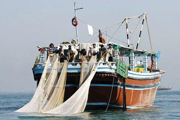 افزایش ۴۰ درصدی صید میگوی در آبهای استان بوشهر