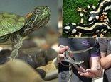 ممنوعیت خرید و فروش برخی گونه های جانوری و گیاهی از جمله سمندر لرستانی، مارآبی و لاک پشت در ایام پایانی سال