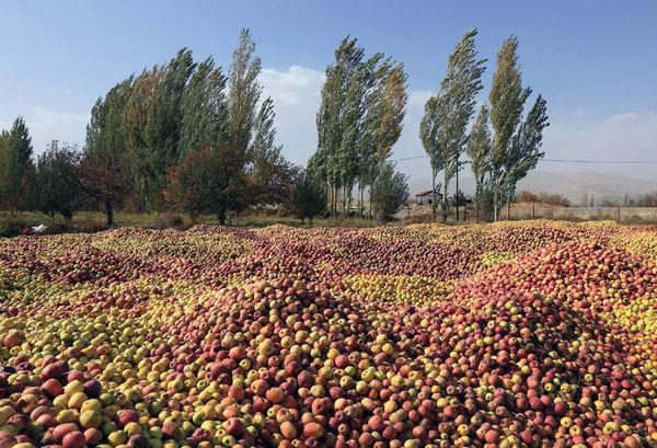 جنگ سرمای بهاری با تولیدات باغی