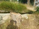 قطع درختان در روستای شانجان