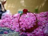تولید 60 هزار تن گل محمدی در سال جاری