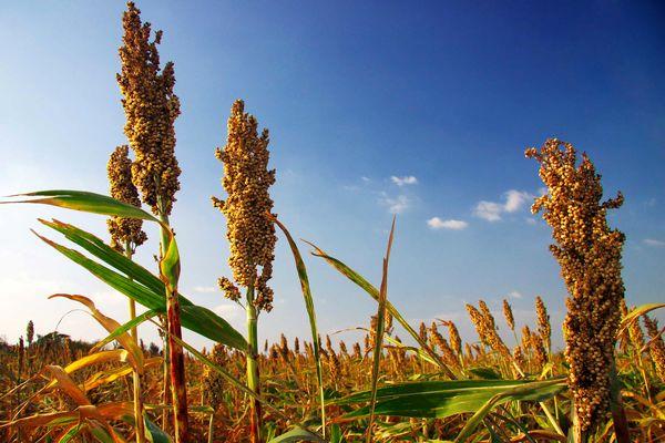 رشد جهانی قیمتها در محصولات غذایی و کشاورزی