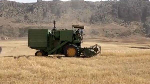 برداشت ۲۰ هزار تن گندم در فریدونشهر