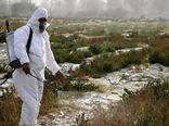 مبارزه با آفت ملخ صحرایی در ۴۰۰ هزار هکتار از اراضی 9 استان جنوبی کشور