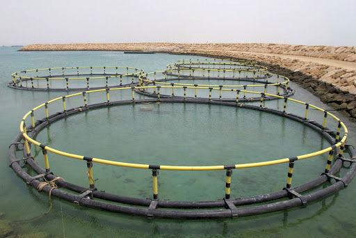 چهار هزار تن ماهی در قفس در استان بوشهر تولید میشود