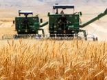 پیشبینی برداشت ۲۵۰ هزار تن گندم در خراسان شمالی