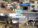 جزئیات خدمات اداره کل دامپزشکی استان کرمان در مناطق سیلزده شهرستان کرمان