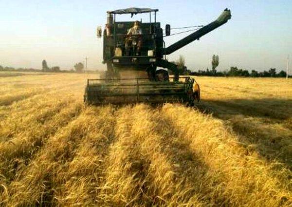 برداشت غلات در شهرستان چرداول