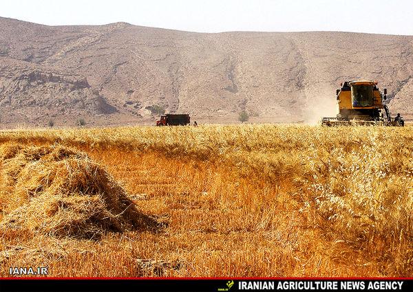 گندمکاران در انتظار اعلام قیمت خرید تضمینی