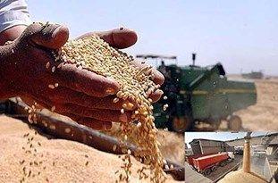 ۲۵ هزار تن گندم در البرز خریداری شد