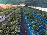 ۲.۵ میلیون اصله نهال شناسهدار در اصفهان تولید شد