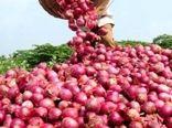 بخشی از اراضی کشاورزی خراسان شمالی به کشت پیاز قرمز اختصاص مییابد