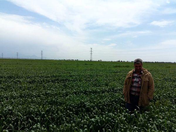 سرپرست مدیریت جهاد کشاورزی شهرستان آبیک :