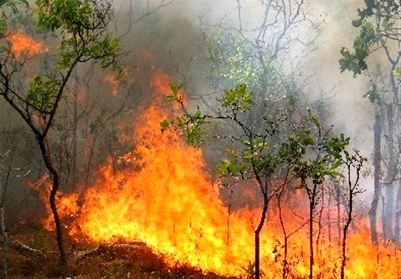 تدارک 10 دستگاه دمنده هوا برای مقابله با آتش سوزی در جنگلها ومراتع استان