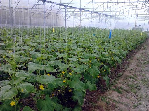 احداث گلخانه های کوچک مقیاس در شهرستان بناب