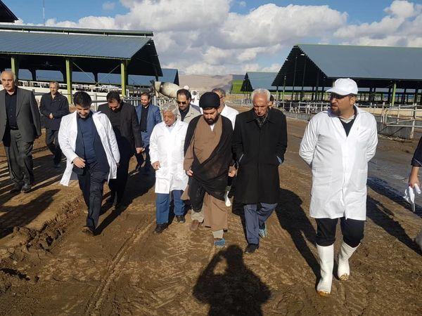 بازدید سرپرست وزارت جهاد کشاورزی از گاوداری ۳ هزار راسی در شهرستان کرمانشاه
