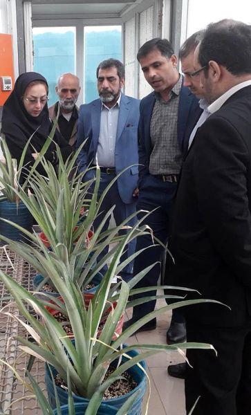 اجرای طرحهای پژوهشی باغبانی در استان خوزستان