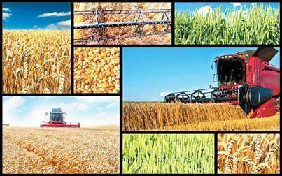 توسعه تشکلها لازمه توسعه کشاورزی پایدار