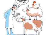 روز ملی دامپزشکی- کارتون فیروزه مظفری