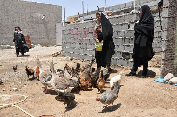 88 درصد صندوق خرد زنان روستایی درسیستان وبلوچستان فعال است