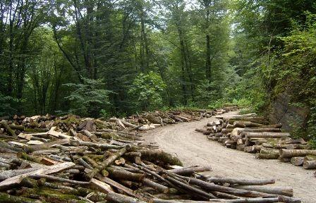 کاهش وابستگی  معیشتی مردم در حفظ جنگل ها موثر است