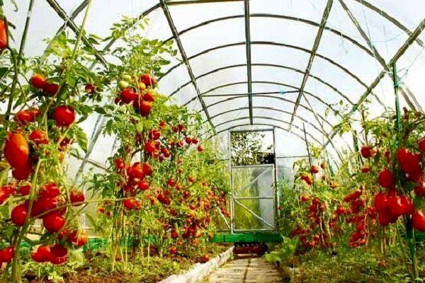 افتتاح دو  طرح  های آب و خاک و یک واحد گلخانه در شهرستان ارزوئیه به مناسبت هفته پدافند غیرعامل