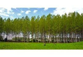 زراعت چوب در 26 هکتار اراضی آمل/ توزیع 23 هزار نهال رایگان