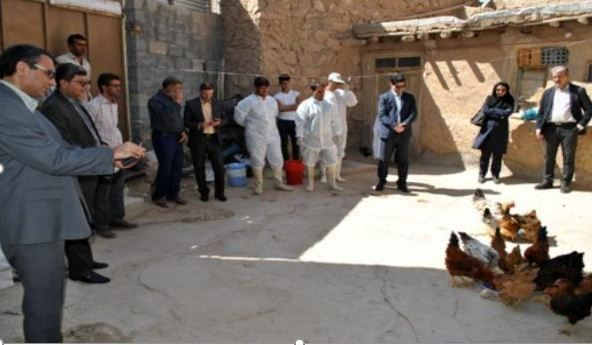 آغاز مرحله جدید واکسیناسیون رایگان طیور روستایی در خراسان شمالی